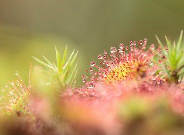 Flora – fot. Katarzyna Ramotowska