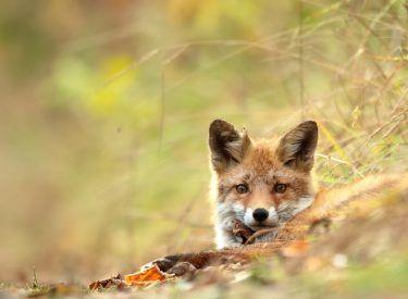 Fauna – fot. Katarzyna Ramotowska